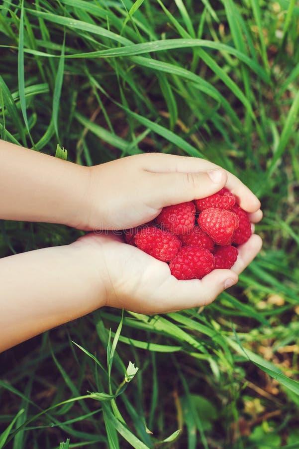 Rijpe rode frambozen in kleine kinderen` s handen stock fotografie