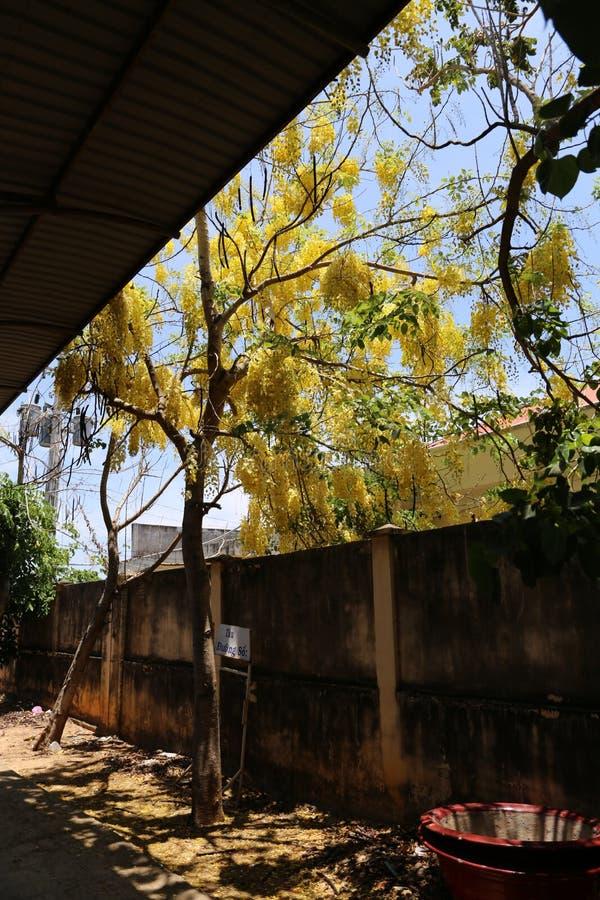 Rijpe rode vruchten op de boom stock fotografie