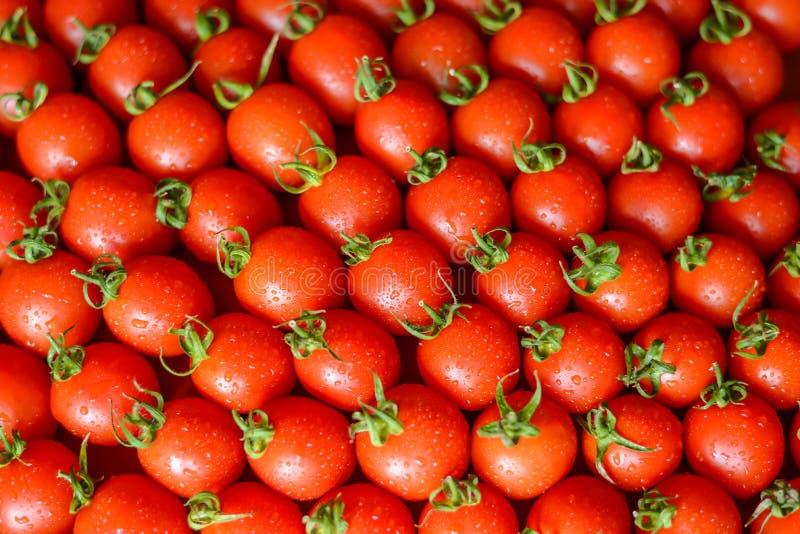 Rijpe sappige tomaten stock foto