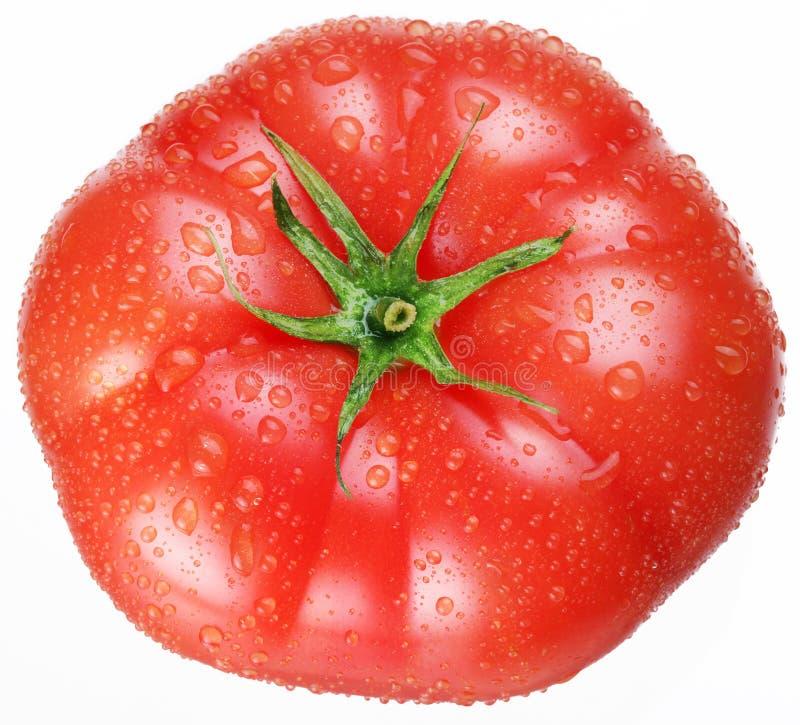 Rijpe tomaat stock afbeeldingen