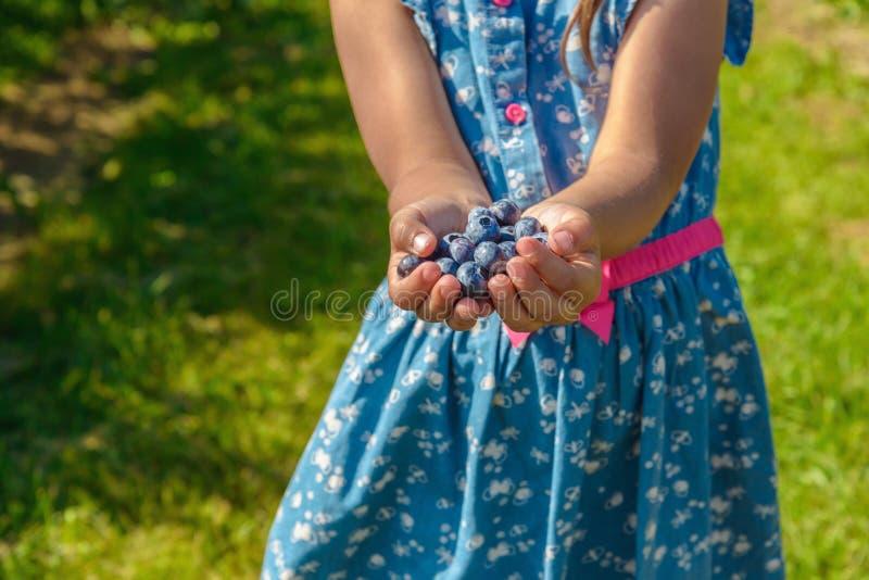 Rijpe verse bosbes in meisjeshanden stock foto