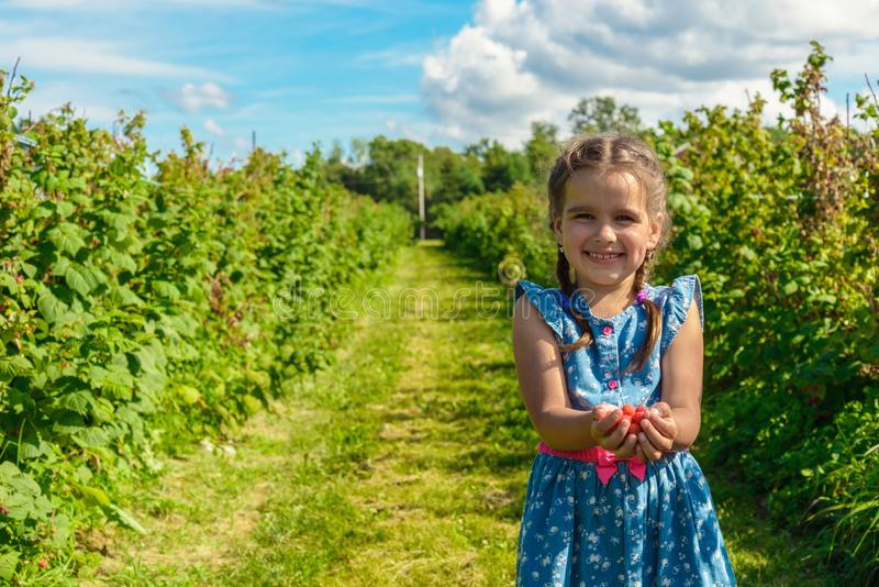 Rijpe verse framboos in meisjeshanden stock fotografie