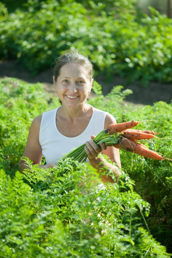 Rijpe vrouw het plukken wortelen stock fotografie
