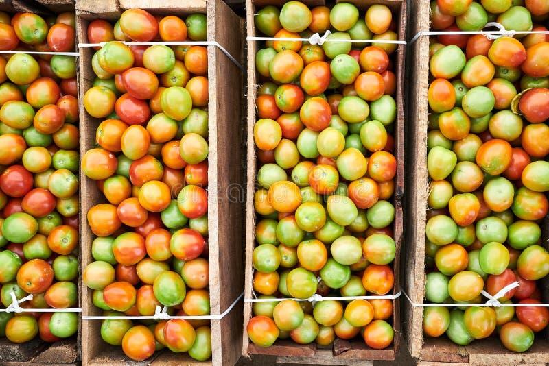 Rijpende Verse Verzamelde Tomaten in Houten Doos stock afbeelding