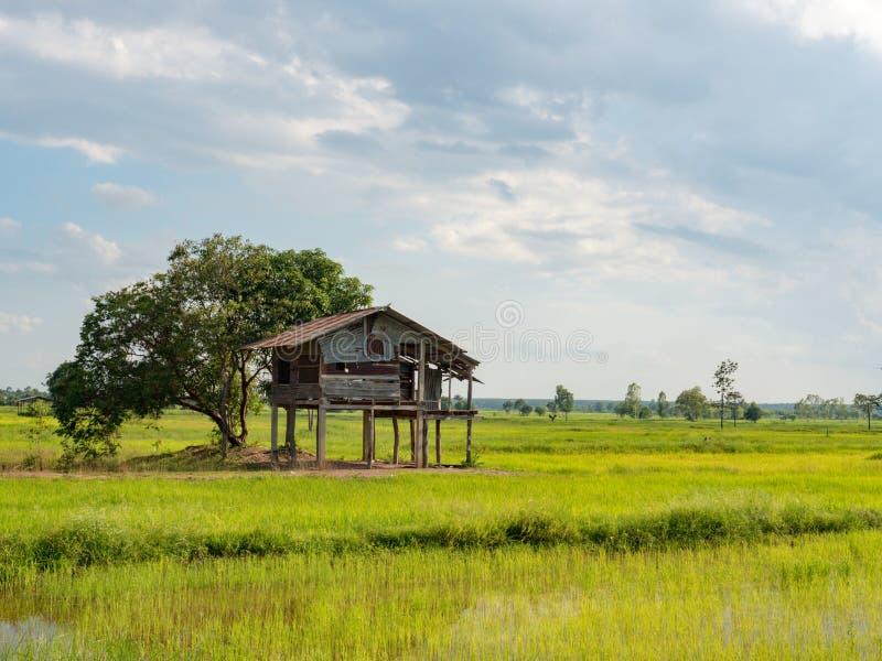 Rijst de landbouwseizoen in Thailand royalty-vrije stock afbeelding