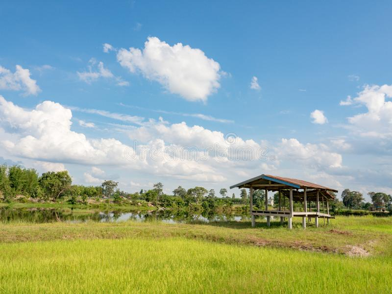 Rijst de landbouwseizoen in Thailand stock foto's