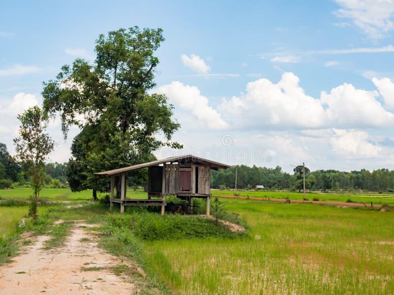 Rijst de landbouwseizoen in Thailand royalty-vrije stock fotografie
