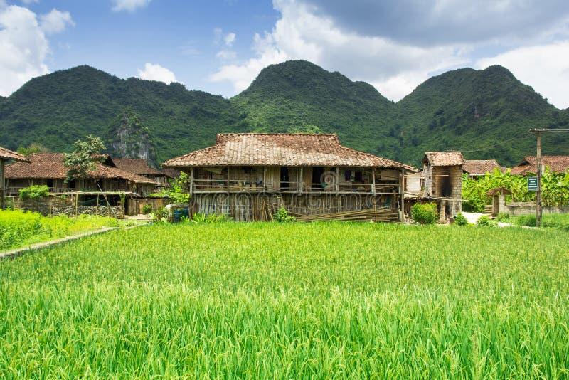 Rijst die rond huis wordt ingediend stock afbeeldingen