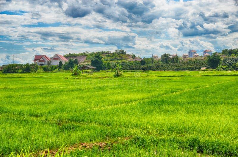 Rijst die rond huis wordt ingediend stock fotografie