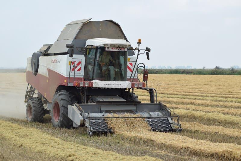 Rijst het oogsten door combineert royalty-vrije stock afbeeldingen