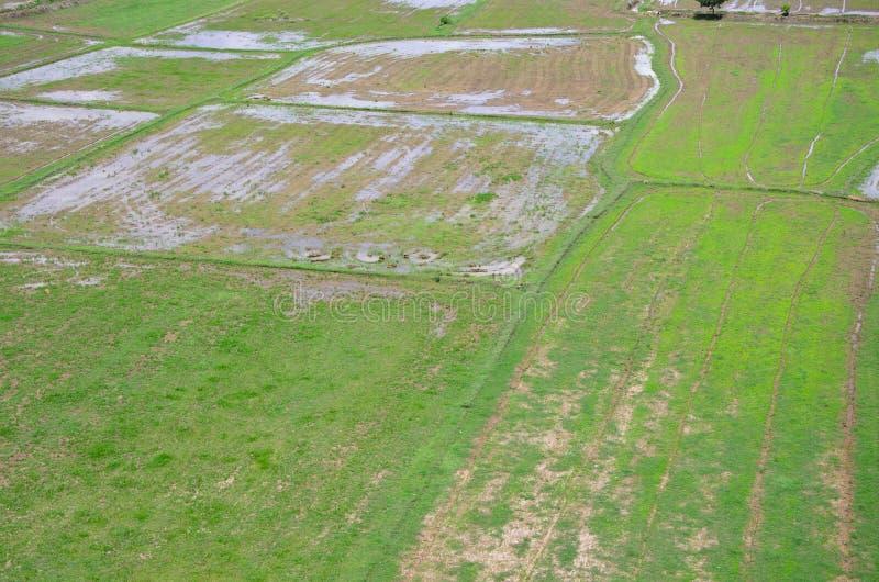 Rijst ingediend landschap hierboven wordt gezien dat van; kanchanaburi Thailand stock fotografie