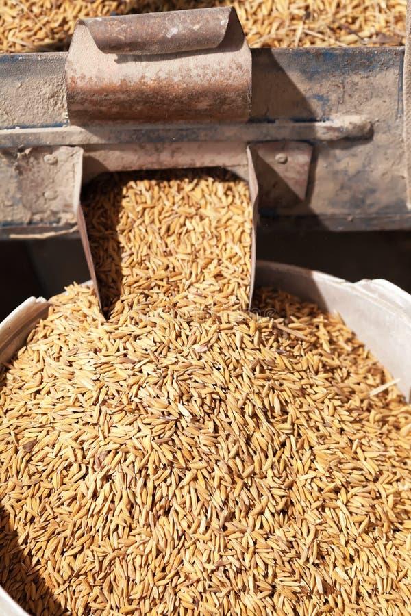 Rijst in malenmachine stock foto