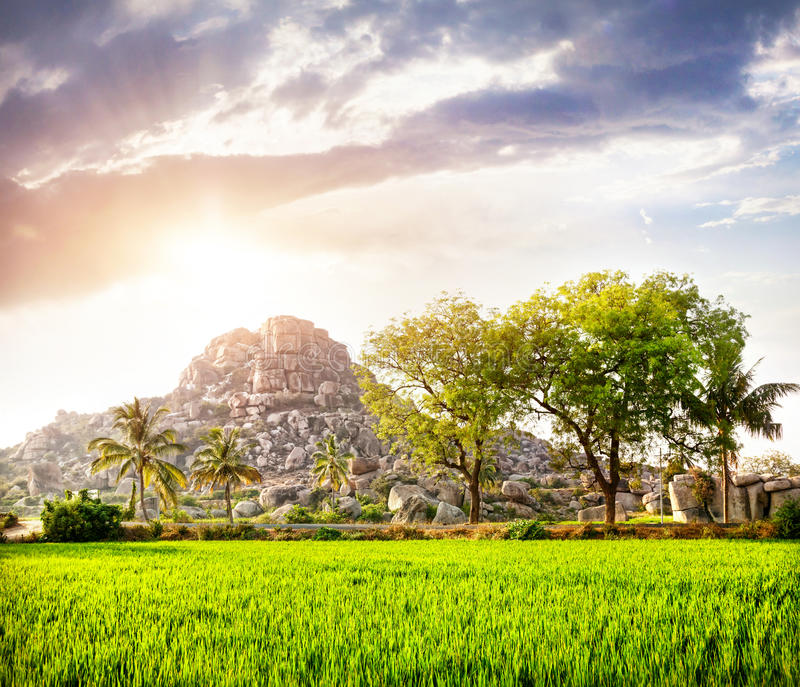 Rijstaanplanting in Hampi royalty-vrije stock foto's
