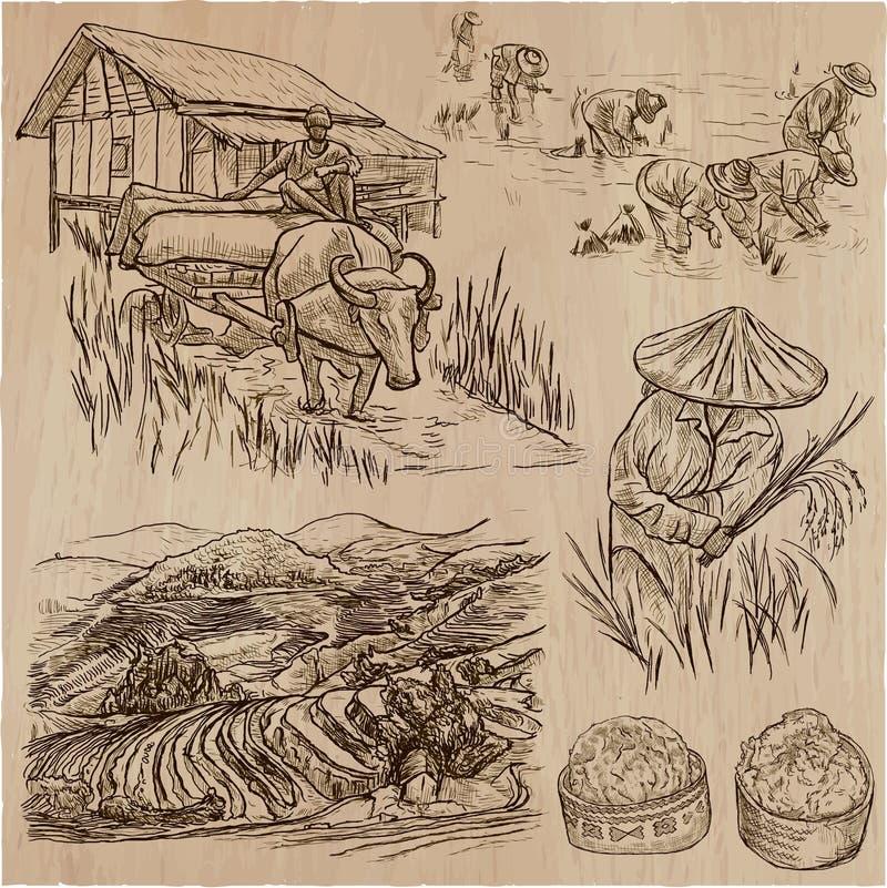 Rijstgewas Landbouw Een hand getrokken vectorreeks royalty-vrije illustratie