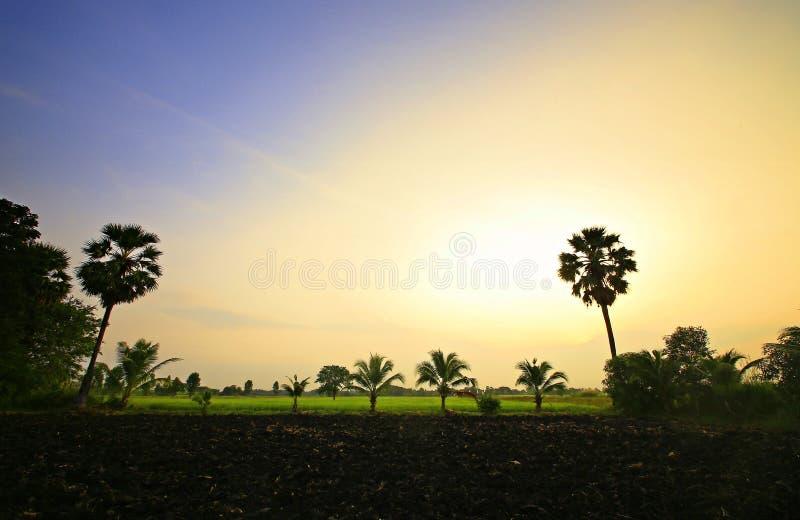 Rijstinstallatie in upcountry van Thailand stock afbeeldingen