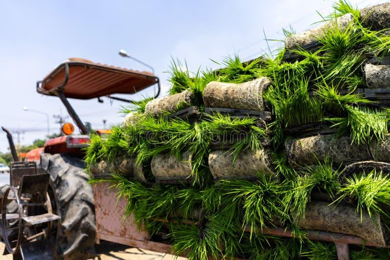 Rijstinstallaties voor landbouwers die met moderne machines moeten worden geplant stock afbeeldingen