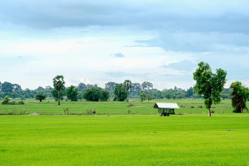 Rijstlandbouwbedrijf met een schuilplaats stock afbeeldingen