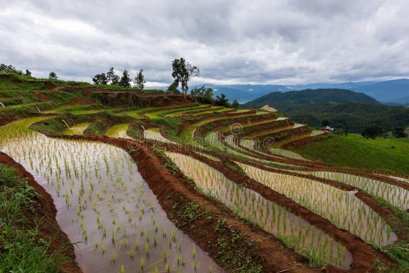 Rijstterras bij Chiang-MAI, Thailand stock foto's