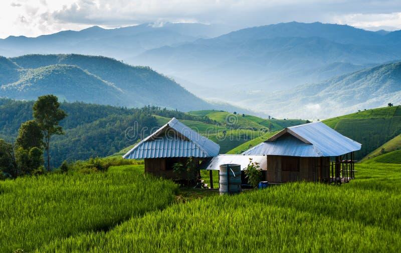 Rijstterras in Chiang Mai stock afbeeldingen
