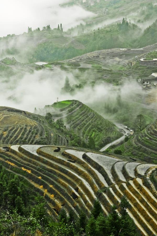 Rijstterras in Nevelig de herfstlandschap van China met rijstterrassen stock afbeeldingen
