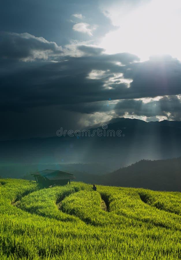 Rijstterrassen in Chiang-MAI, Thailand stock foto's