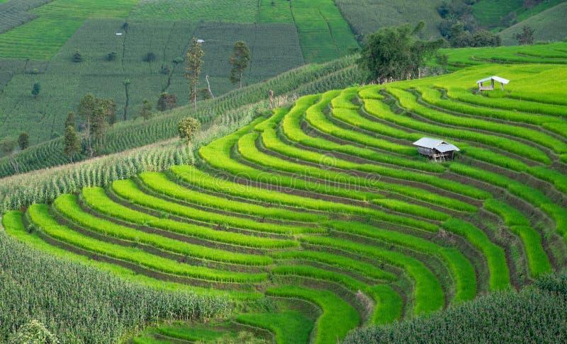 Rijstterrassen in Chiang-MAI, Thailand royalty-vrije stock foto