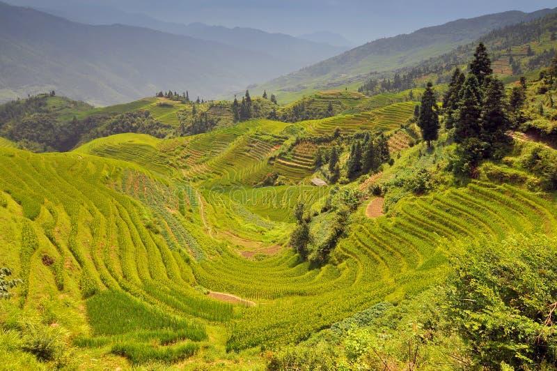 Rijstterrassen, Longji Titian, Guilin, Guangxi, China stock foto