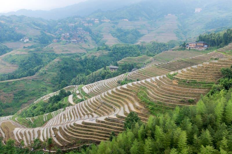 Rijstterrassen in Longsheng, China royalty-vrije stock fotografie