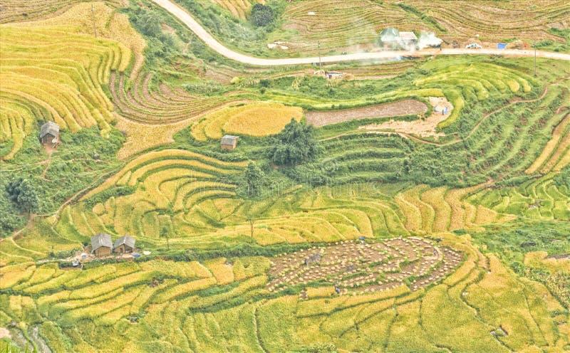 Rijstterrassen in noordwestelijk Vietnam royalty-vrije stock afbeeldingen