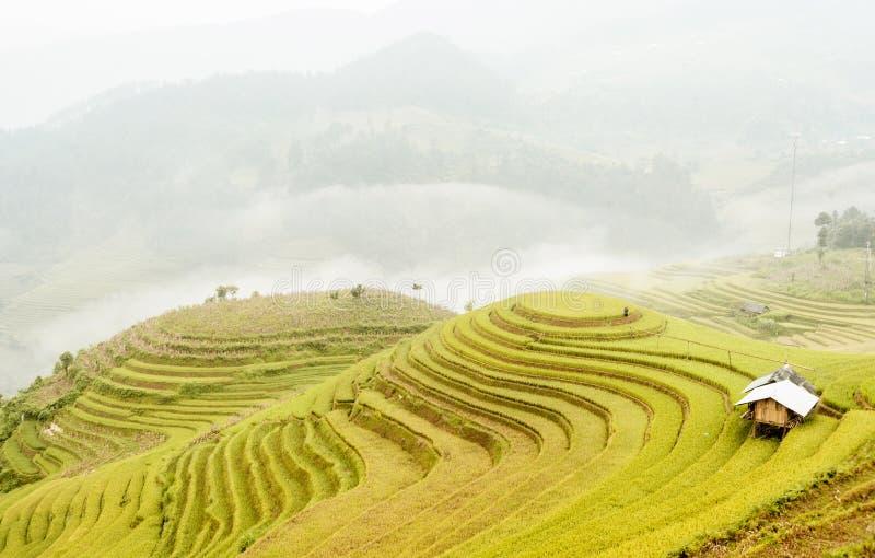 Rijstterrassen in noordwestelijk Vietnam royalty-vrije stock foto