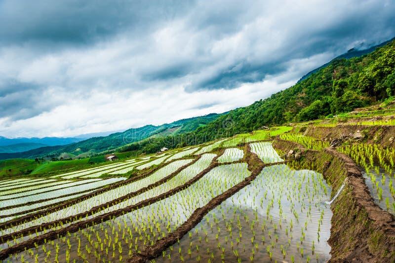 Rijstterrassen in Thailand Padievelden op terrasvormig in rainny seizoen in Chiang Mai royalty-vrije stock foto's