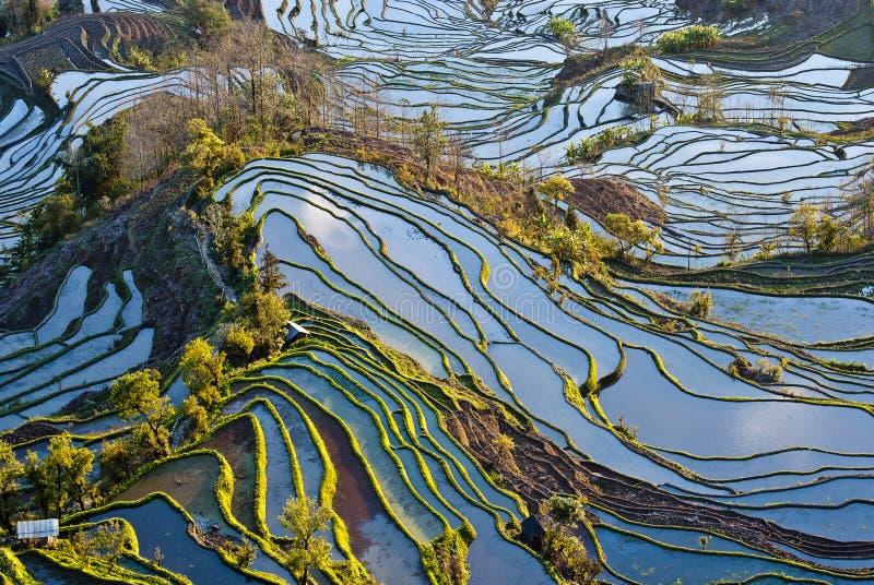 Rijstterrassen van yuanyang stock afbeelding