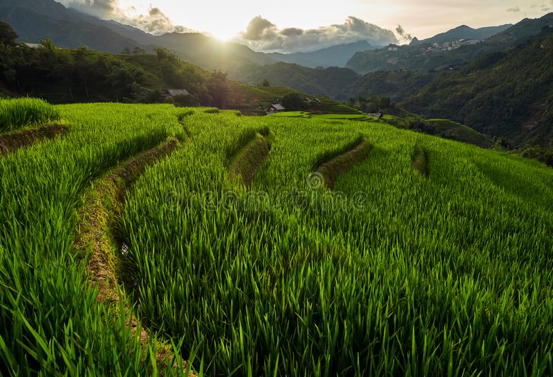 Rijstvelden op terraced van Mu Cang Chai, YenBai, Vietnam Rijstvelden bereiden de oogst in Noordwest-Vietnam voor royalty-vrije stock foto's