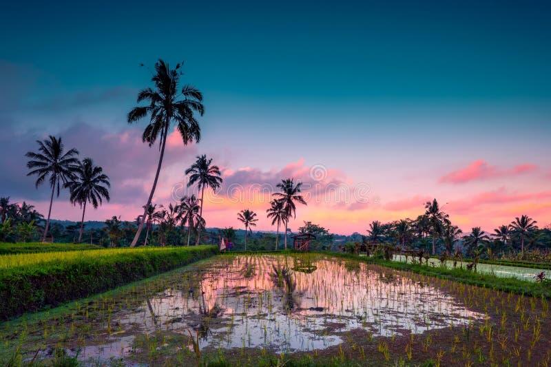 Rijstvelden van Bali stock afbeelding