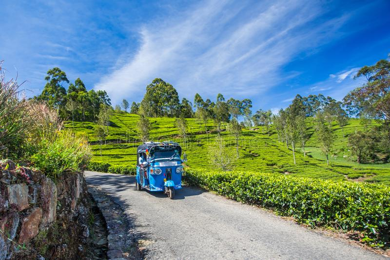 Rikshaw в плантациях поля чая, Шри-Ланка стоковая фотография rf