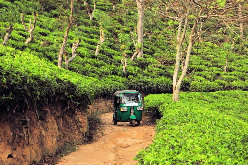 Rikshaw in Tea field plantations, Sri Lanka royalty free stock images