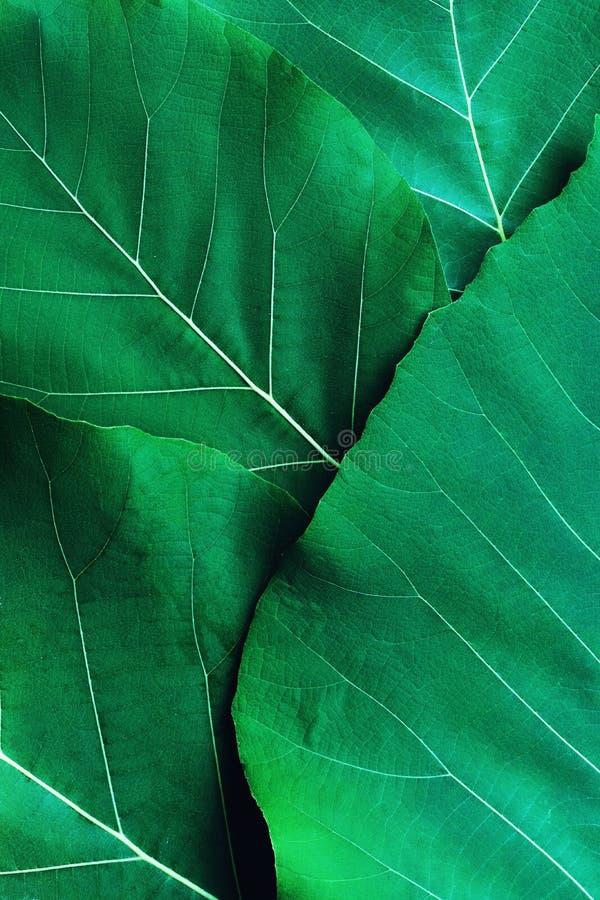Rikt djupt - grön bladtexturbakgrund, härligt naturmodellbegrepp royaltyfria bilder