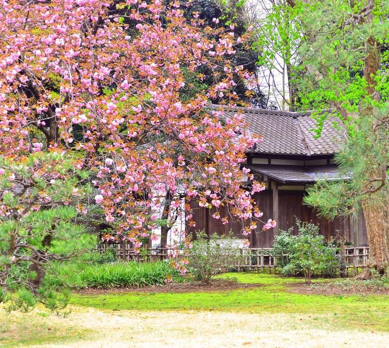 Rikugien trädgård av Tokyo royaltyfria foton