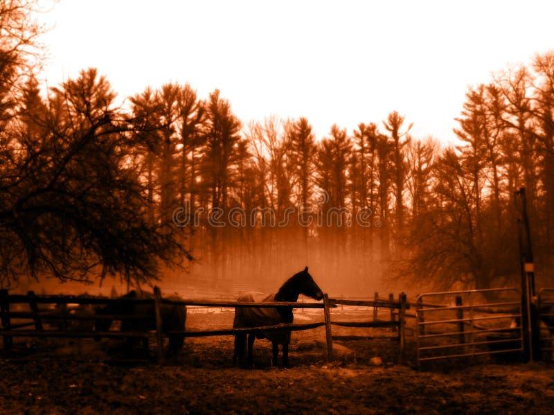Download Rilasciato fotografia stock. Immagine di equino, podere - 211954