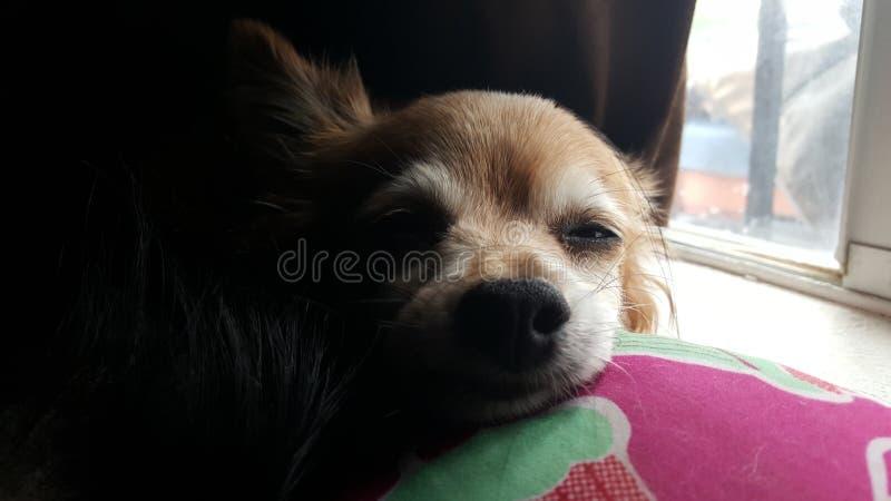 Rilassamento del cane immagini stock libere da diritti