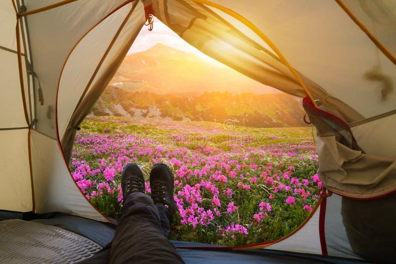 Rilassandosi con una tenda in un campo della montagna di estate fotografie stock