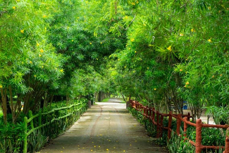 Rilassi e percorso della passeggiata di freschezza sotto l'albero immagine stock