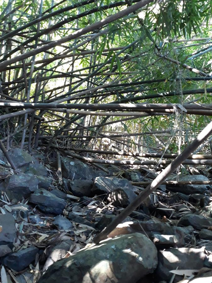 Rill i bambus zdjęcie royalty free