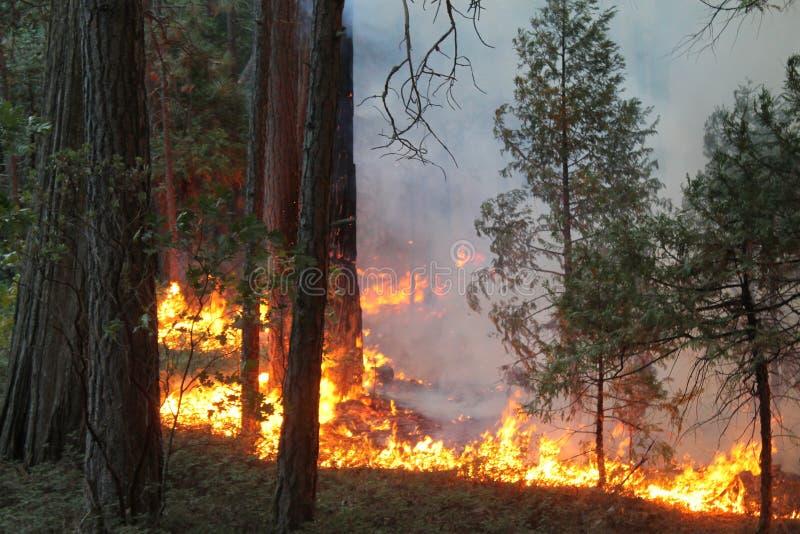 Rim Fire ~ Yosemite ~ verano de 2014 imagenes de archivo
