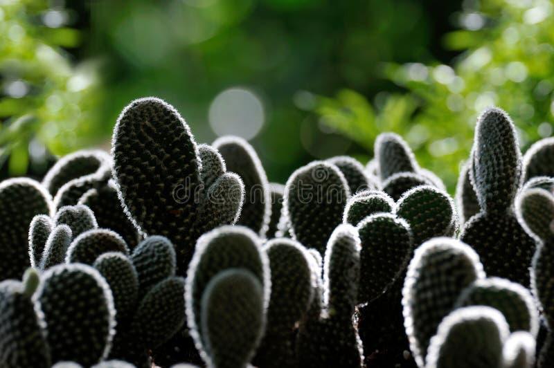 Rim Light Around Cactus Stock Images
