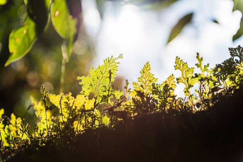 Rim light of leaf stock photo