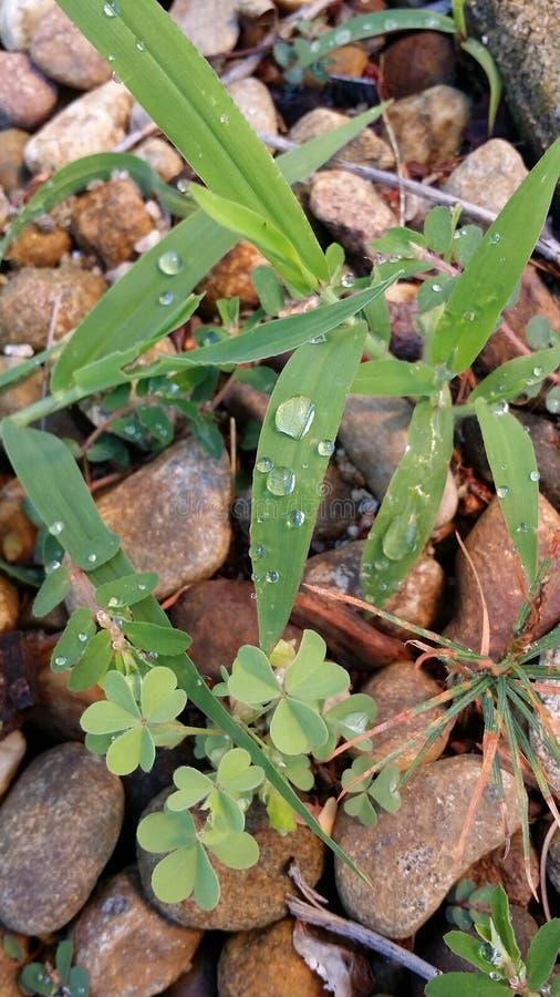 Rimanere della pioggia fotografia stock