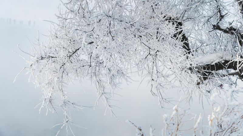 Rime. Commonly known as the tree, it is in cold season, on cooling too saturated vapour in the Air China, and is not for natural wonders stock photography