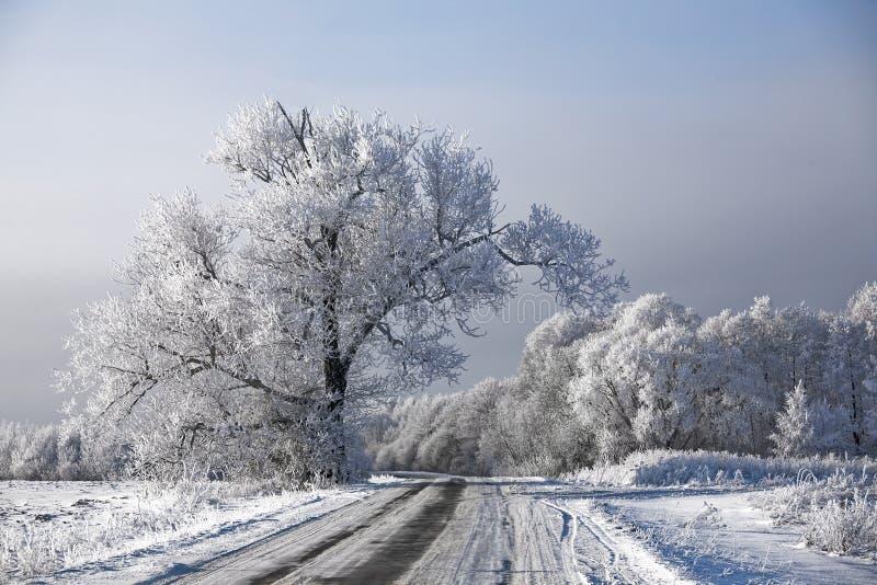 Download Rime Geado Paisagem Das árvores Da Estrada Do Inverno Imagem de Stock - Imagem de christmas, gelo: 12802119