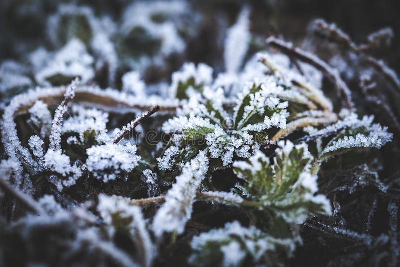 Rime on leaves. Covered on edges of white crystals. Winter is coming. Autamn season. Close-up photo. Macro photography. Covered on the edges of white crystals of royalty free stock images